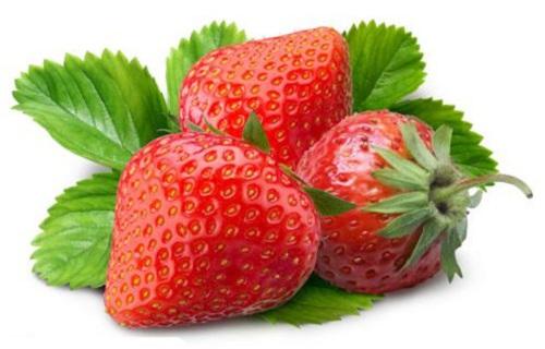 乌鲁木齐四季草莓苗生产基地