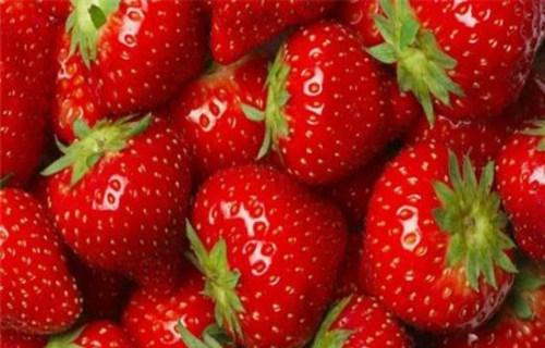 黄南四季草莓苗哪里有卖