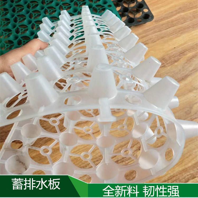 黃岡5公分塑料植草格廠家新穎獨領潮流